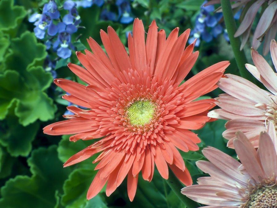Augalai megstantys saules sviesa ir siluma
