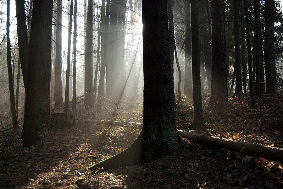 Сексам занимаются в лесу фото 23 фотография
