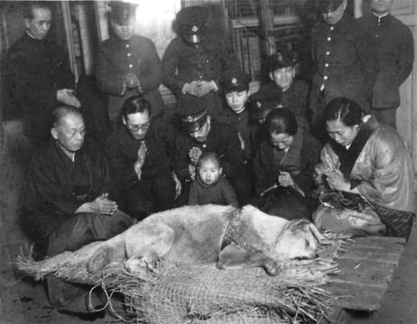 Hachiko mirtis 1935 m.