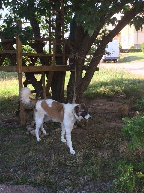 Ieško į namus atklydusio šuns šeimininkų
