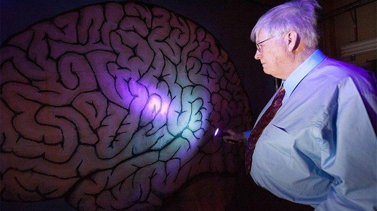 Новая ступень впонимании смерти: ученые попробуют регенерировать мертвый мозг