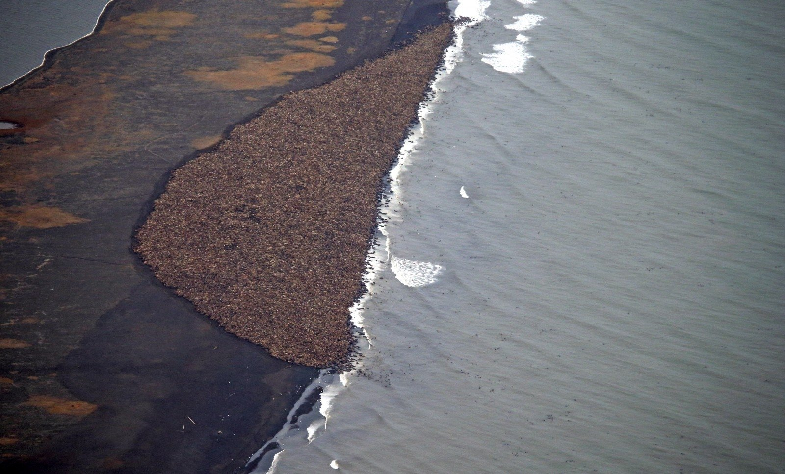 ВСети появилось видео таинственного чудовища, всплывшего уберегов Аляски