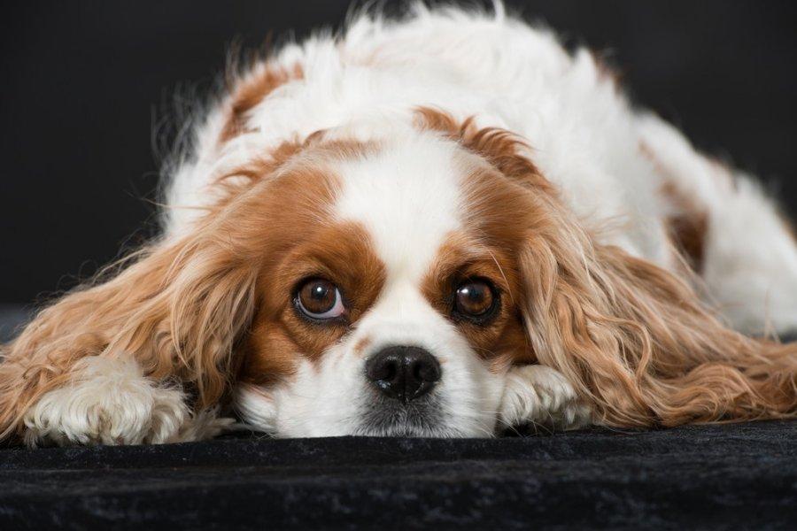 geriausi šunų prekybos rodikliai