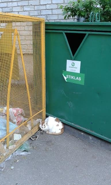 Katinėliui Giriui reikia pagalbos