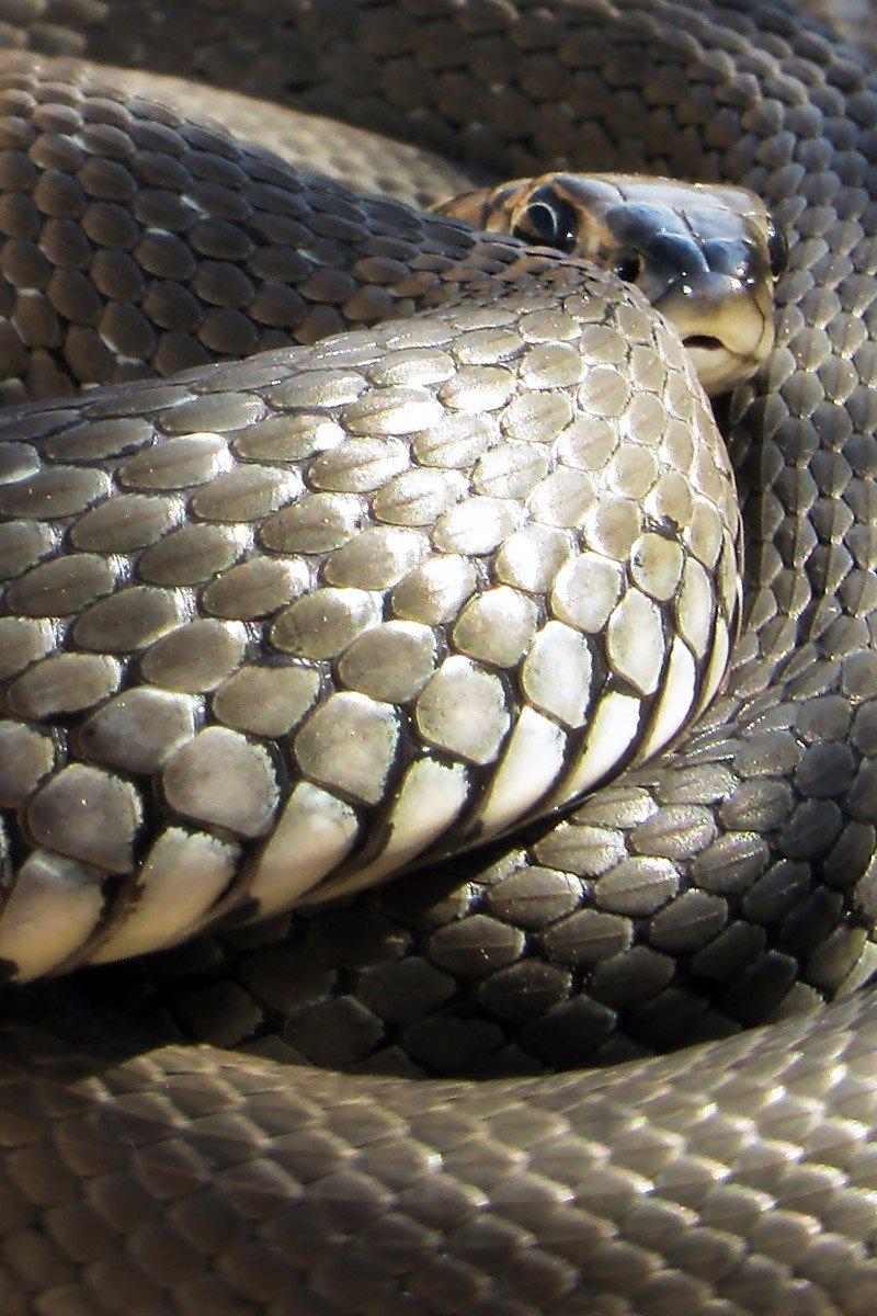 Если укусила змея