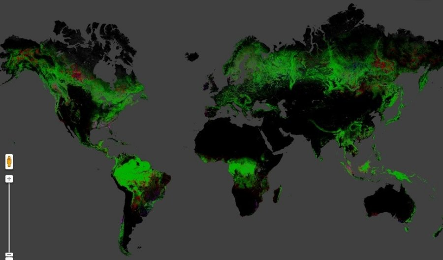 Pasaulio miškai