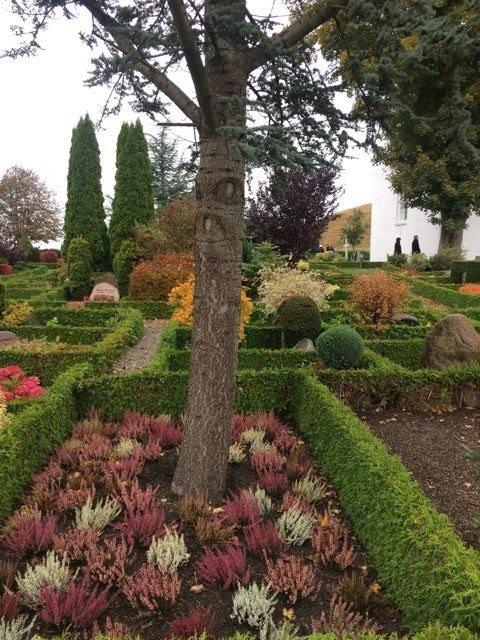 Viržiai – populiarūs kapinių augalai, ypač rudenį.