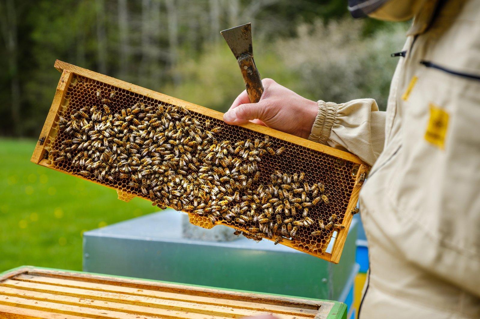 Palaikymo sulaukęs bitininkas – pasiryžęs įrodyti ...