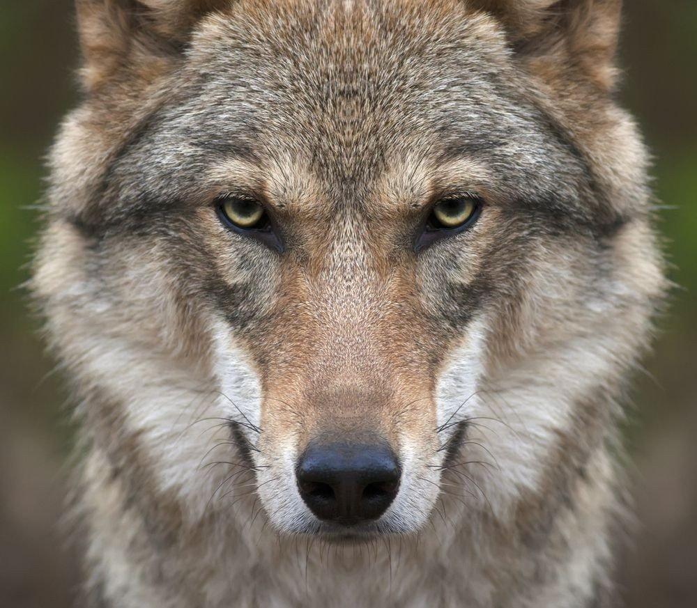 Наше освобождение не означает, что Путин хочет мира. Волк не потерял зубов, - Сенцов - Цензор.НЕТ 3628