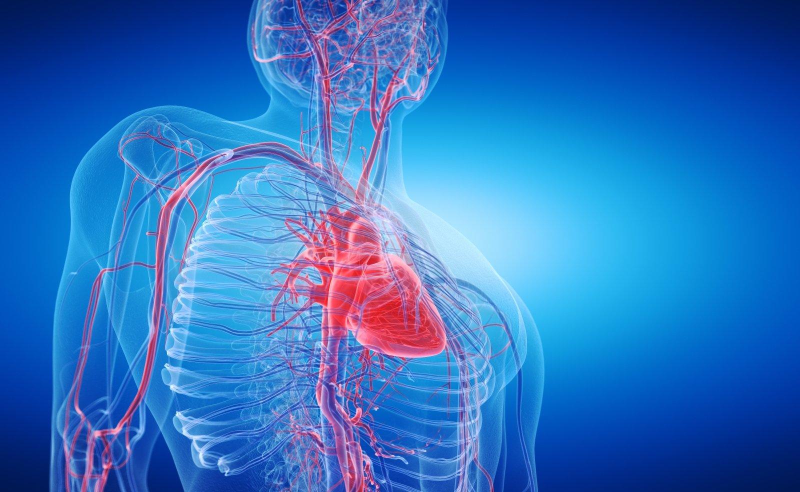 galvos širdis rankų sveikata 4